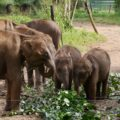Elefantenkinder im Elefant Transit Home